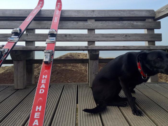 """Wie kam der Hund mit den Skiern auf die Uwe-Düne von Kampen? Als Begleiter vom ersten Vorsitzenden des """"Kampener Skiclubs"""", der dort oben ein Interview gab. Das Tier heißt """"Lakritz"""". Macht Sinn."""